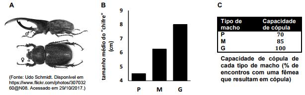 unicamp-2018-a-figura-a-abaixo-mostra-o-claro-dimorfismo-sexual-que-ocorre-na-especie-de-besouro-neotropical-dynastes-hercules-besouro-hercules-um-dos-maiores-besouros-do-mundo