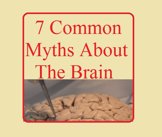 cph4, Brain Mythology, Cool Brain Facts & Myths, popular myths about human brain