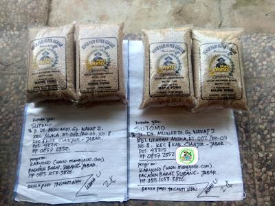 Benih padi yang dibeli SUTOMO Cianjur, Jabar. (Sebelum packing karung ).