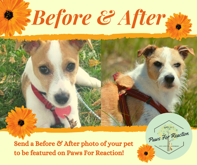 July featured pets: Send a 'Before & After' photo of your pet to be featured on Paws For Reaction