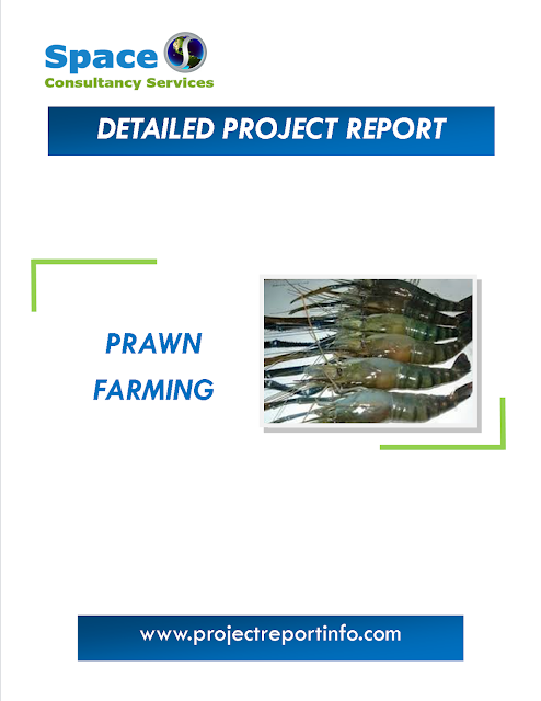 Project Report on Prawn Farming
