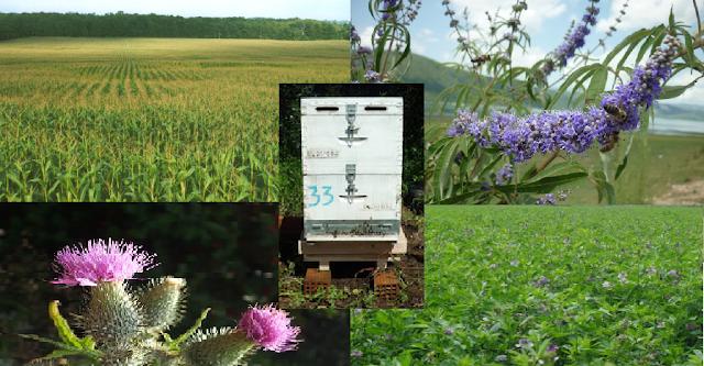 Τι λέει η ζυγαριά της  bees scale στις καλοκαιρινές νομές