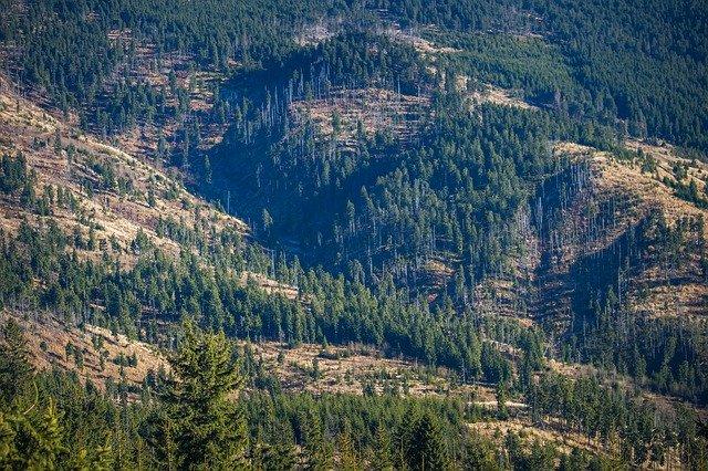 deforestacion en el mundo
