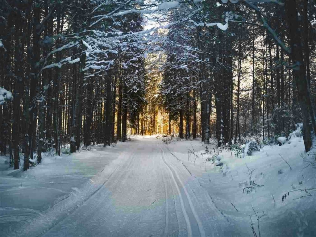 Windy Ridge Trail -- Winter
