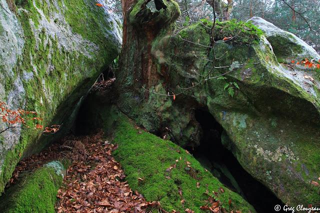 Souche du chêne des Fées du Mont Ussy, Fontainebleau