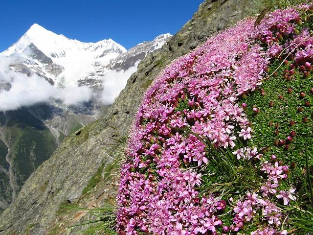 Tour de Monte Rosa szlak, trekking