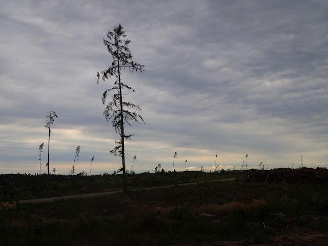 Okolice Rytla po nawałnicy z 2017
