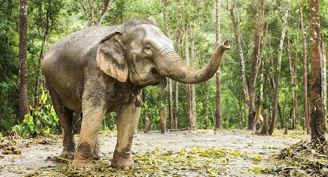 بالصور.. 14 فيلا في حالة سكر تام بعد شربهم 30 كيلوغراما من النبيذ