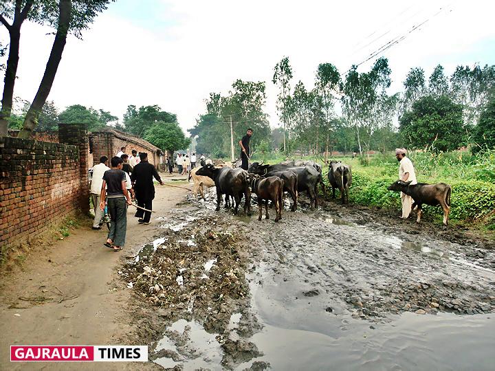 village-flood-in-ganga-khadar