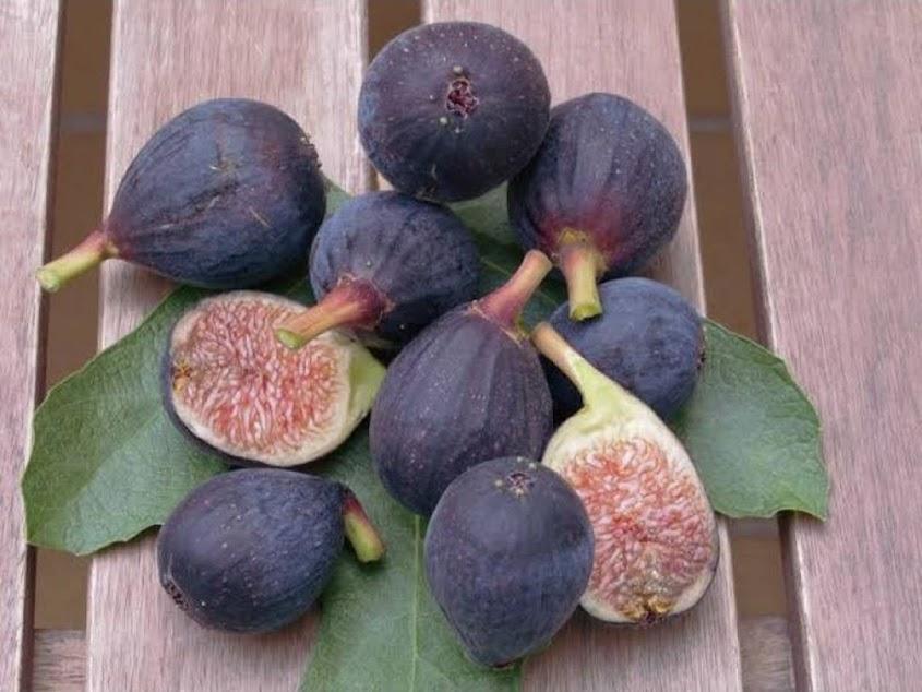 Bibit buah tin hitam sangat produktif RONDE DE BORDEAUX Salatiga