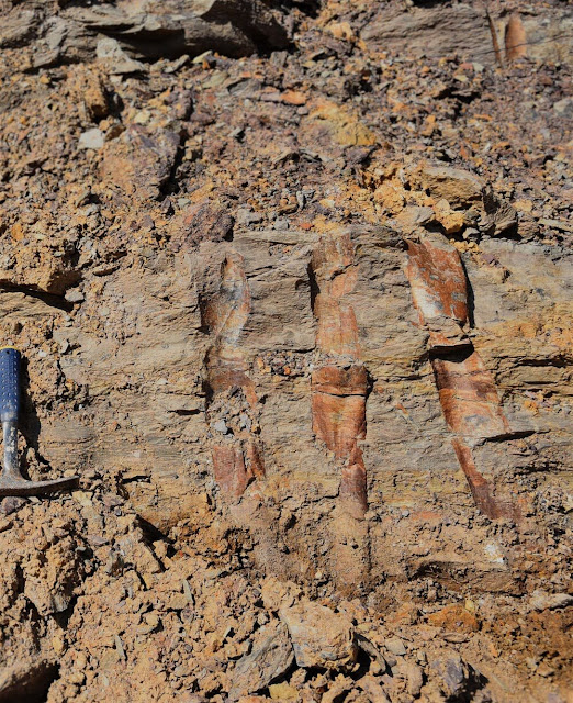 Researchers discover oldest fossil forest in Asia