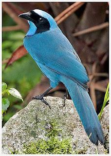 http://photofun4u.com/4-real-life-angry-birds