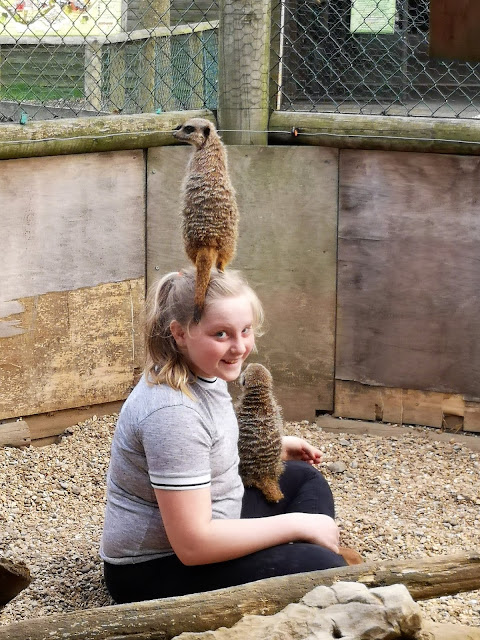 Girl in Meerkat enclosure
