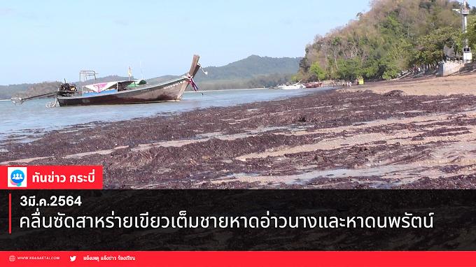 คลื่นซัดสาหร่ายเขียวเต็มชายหาดอ่าวนางและหาดนพรัตน์ธารา
