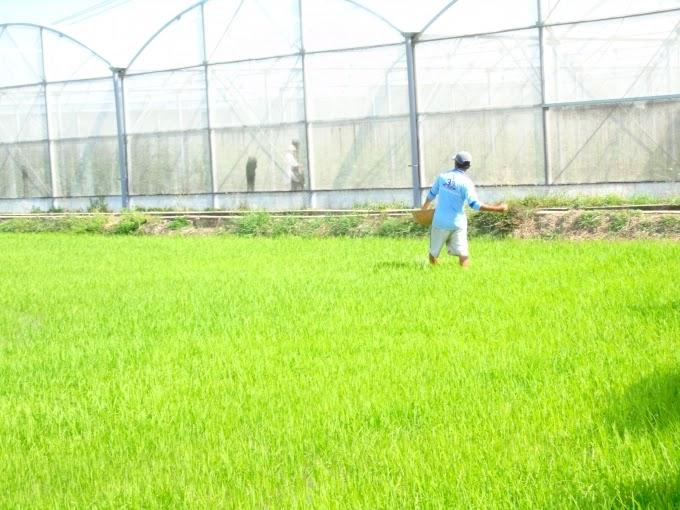 Ninh Thuận xây dựng 2 kịch bản sản xuất vụ mùa