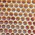 بيض النحل