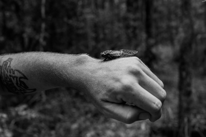 empty cicada shell on hand