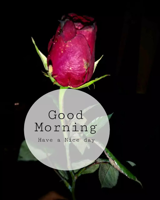 good morning flowers image