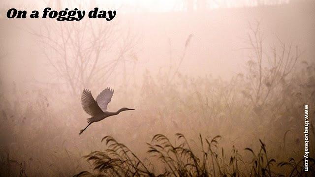 Fog Quotes Into The Mist Van Morrison Also Captions & Status