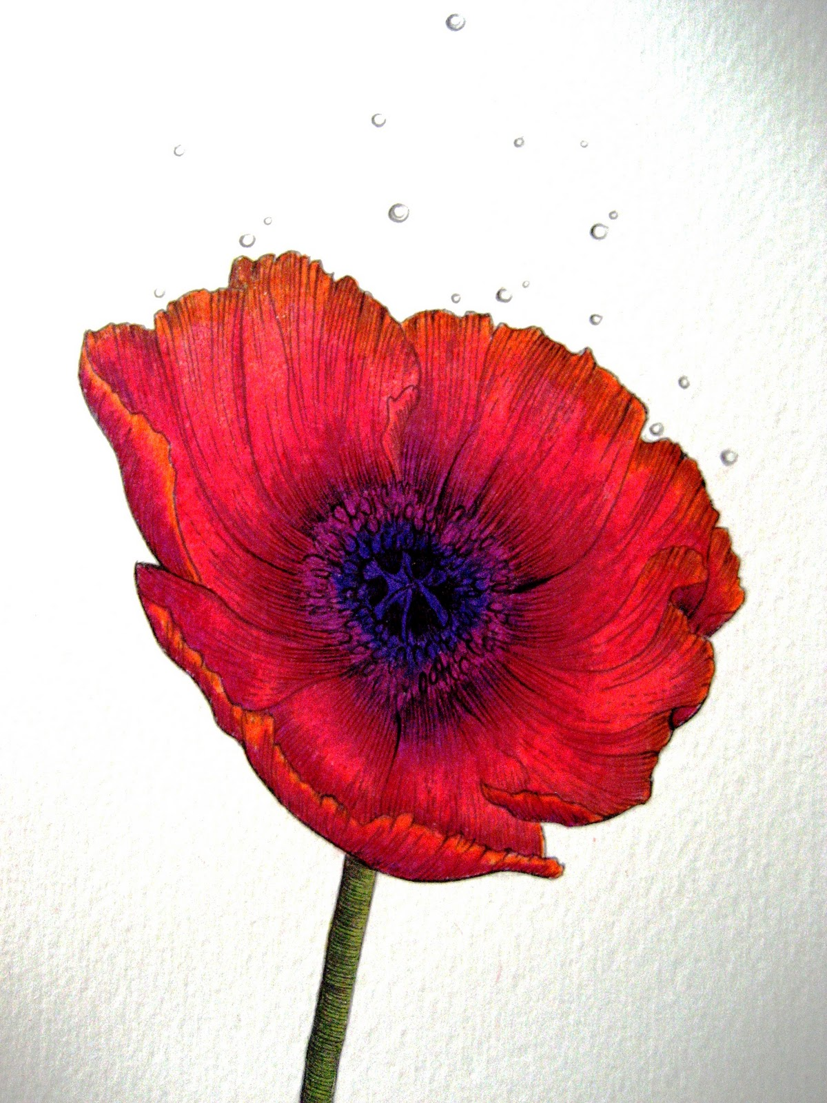 Drawing Poppies Related Keywords & Suggestions - Drawing ...