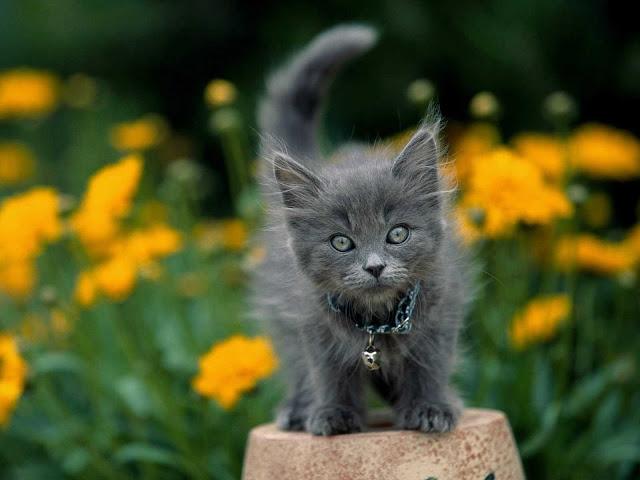 صور قطط جميلة hd 2020