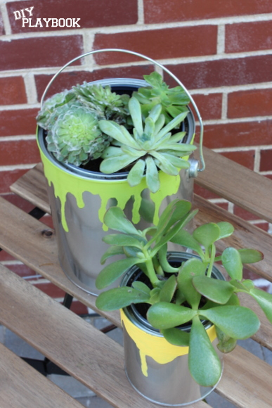 Succulents look so cute in these paint can planters.