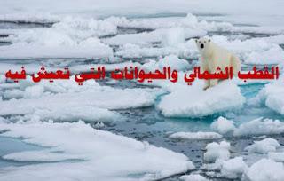 القطب الشمالي بالانجليزي, القطب الشمالي صيفا, القطب الشمالي الطقس, القطب الشمالي ليلا, القطب الشمالي في الصيف, القطب الشمالي يذوب, القطب الشمالى يبدأ فى الذوبان بسبب الاحتباس الحرارى