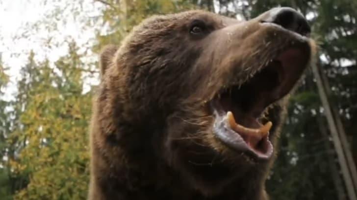Фильм ужасов «Гризли 2: Месть» выйдет в январе - спустя 37 лет с начала съёмок!