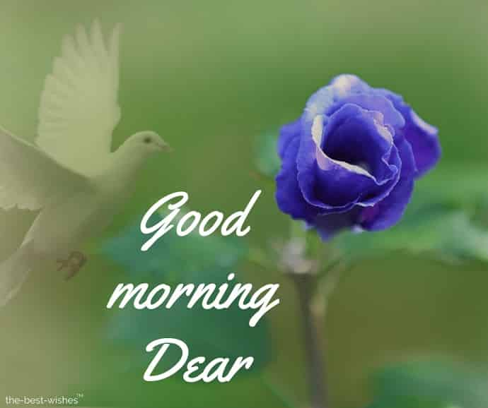 good morning dear darling