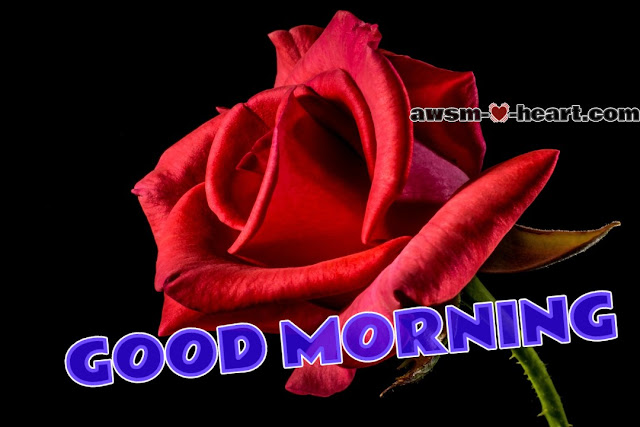 Latest good morning images with rose flowers