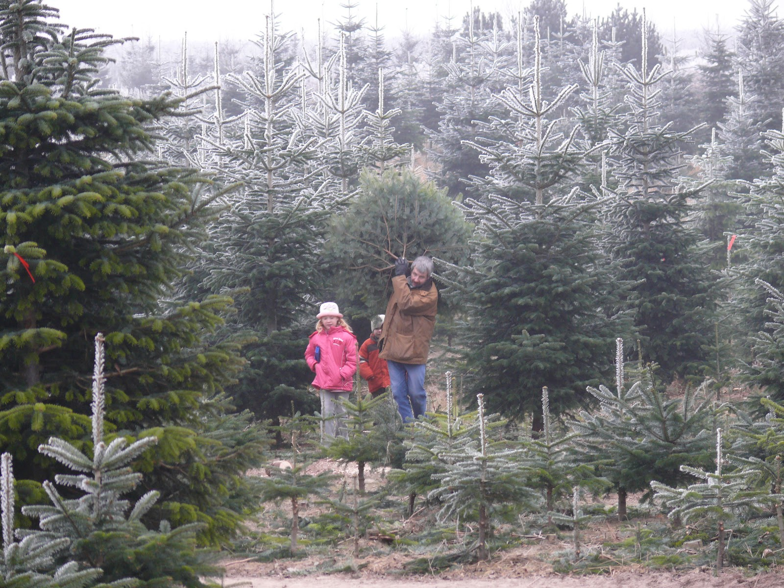 christbäume selber schlagen bayern