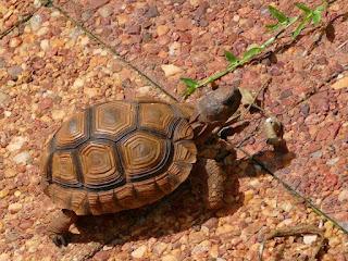 kura-kura-darat-agar-tidak-sakit.jpg