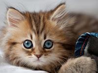 鼓舞人心的故事:总是在昂贵的猫