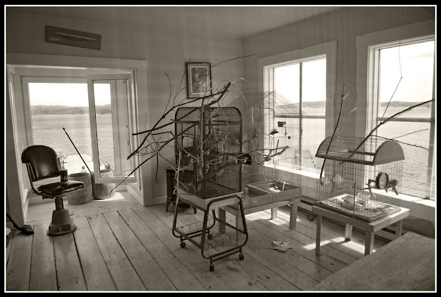 Nova Scotia; LaHave River; LaHave Bakery; Cage; Bird Cage; Bird; Barber Chair