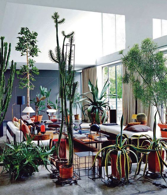 Tendance deco Urban Jungle