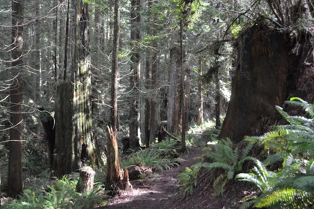 trail beside a cut stump
