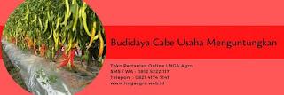 pupuk susulan cabe, bambu ijo, pupuk organik cair, pemupukan cabe, jual pupuk, toko pertanian, toko online, lmga agro