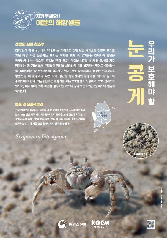 해수부, 2020년 7월 이달의 해양생물 '눈콩게' 선정