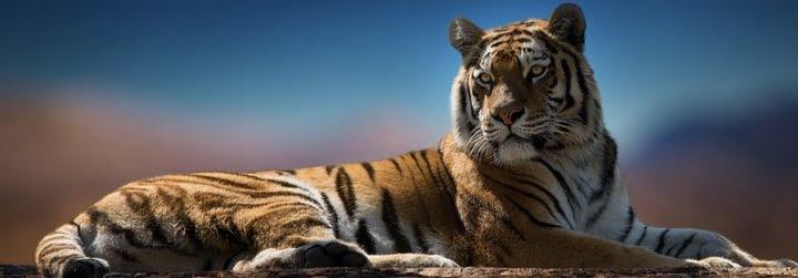 Anul Tigrului De Apa, Horoscop Chinezesc 2022