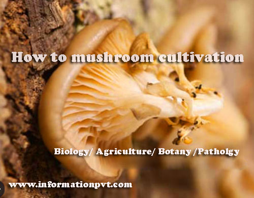 How to mushroom cultivation