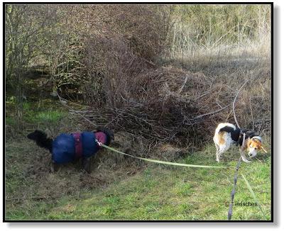 zwei Hunde spielen
