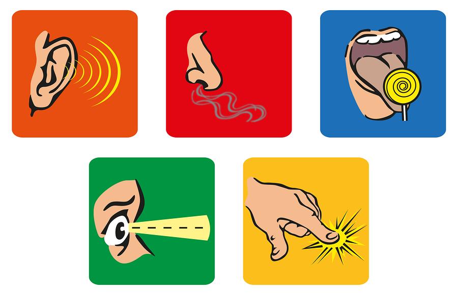 Favoritos Atividades para o trabalho com os 5 sentidos na Educação Infantil  EC44