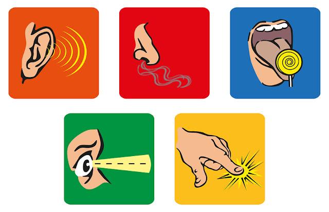 Atividades para o trabalho com os 5 sentidos para Educação Infantil