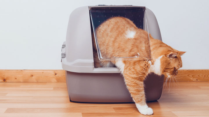 why-does-my-cat-pee-outside-the-litter-box