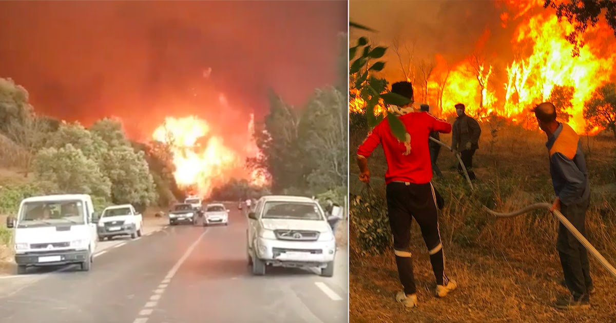 At Least 65 People Die As Wildfires Sweep Across Algeria, Including 25 Soldiers Sent To Fight The Flames