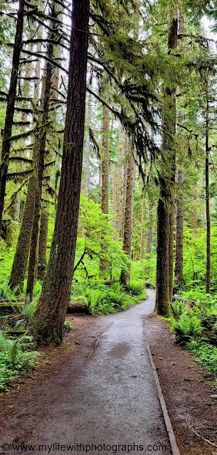 Beautiful trail under big trees