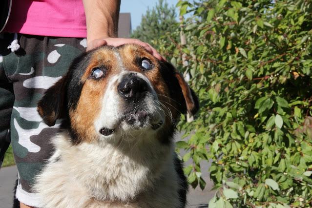 training a blind dog