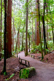 Whakarewaewa Redwood Forest  Rotorua New Zealand