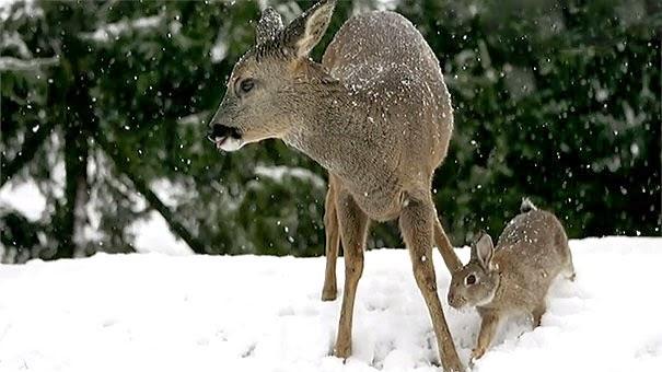 Extraña amistad entre animales de distintas razas