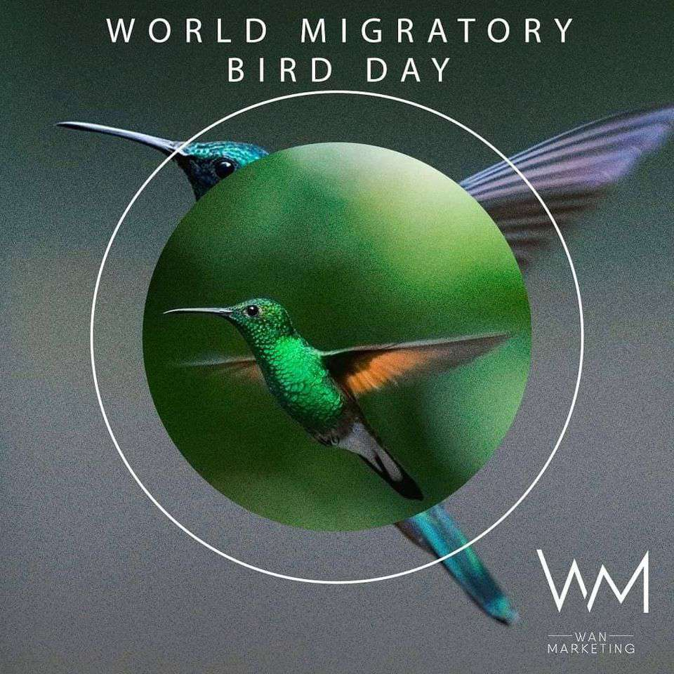 World Migratory Bird Day Wishes pics free download
